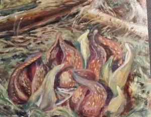 Skunk Cabbages-Ken Phillips